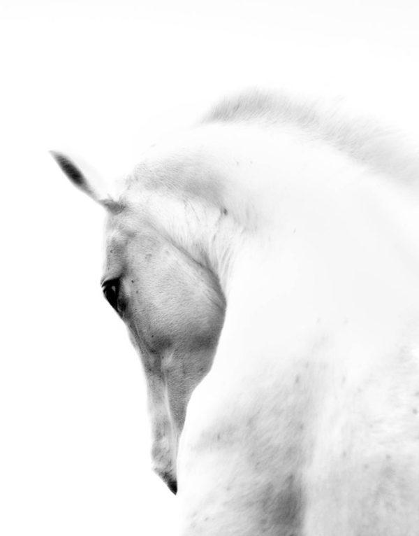 Morsink Dier & Hobby - paard paralux 1