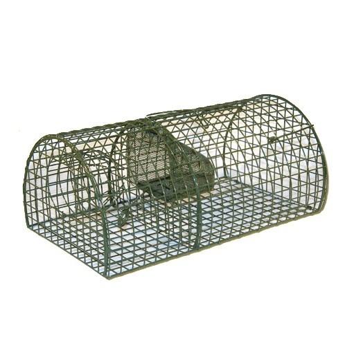 Morsink Dier & Hobby - rattenval levend groen
