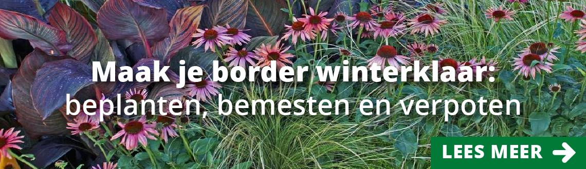 Morsink Dier & Hobby - frame header herfst morsink 01
