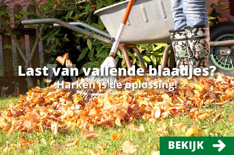 Morsink Dier & Hobby - frame herfst morsink harken Tekengebied 1
