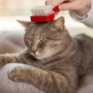 Kattenverzorging