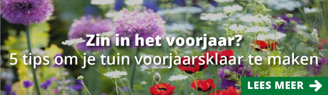 Morsink Dier & Hobby - 0101 Headerbeeld voorjaar 1140x330px 01